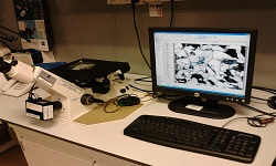 Material Microscopic Analysis